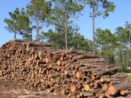 Comércio de madeira e produtos derivados de madeira - Novas regras europeias